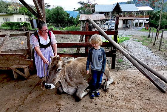 Kuh auf dem Bauernhof